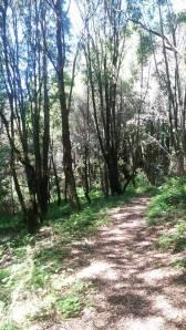 park woods