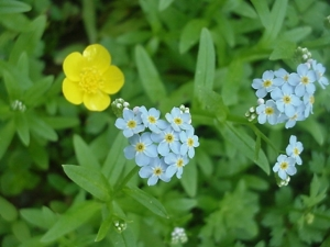 ForgetMeNotTrue052712