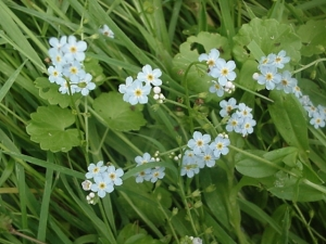 ForgetMeNotTrue060411