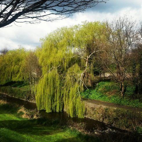 Weeping willow - milltown